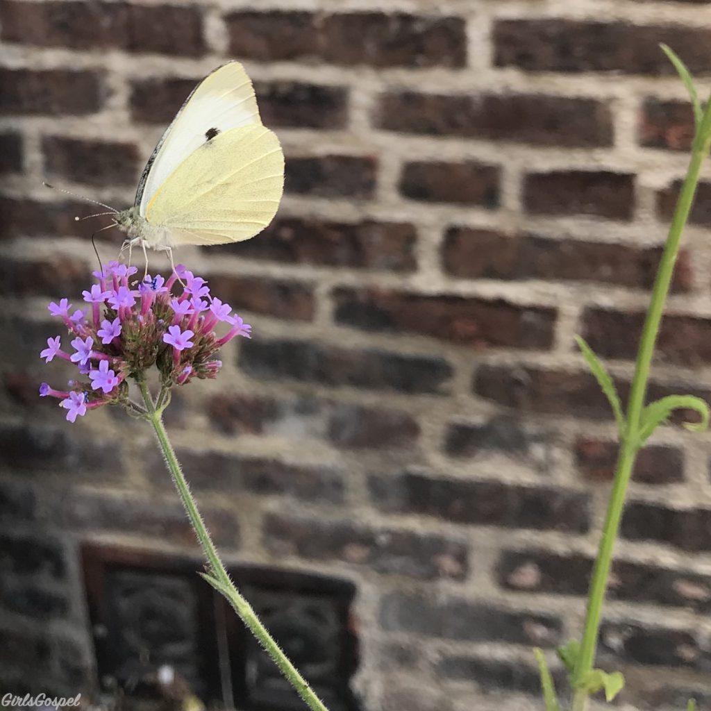 My Sunday Photo - butterfly