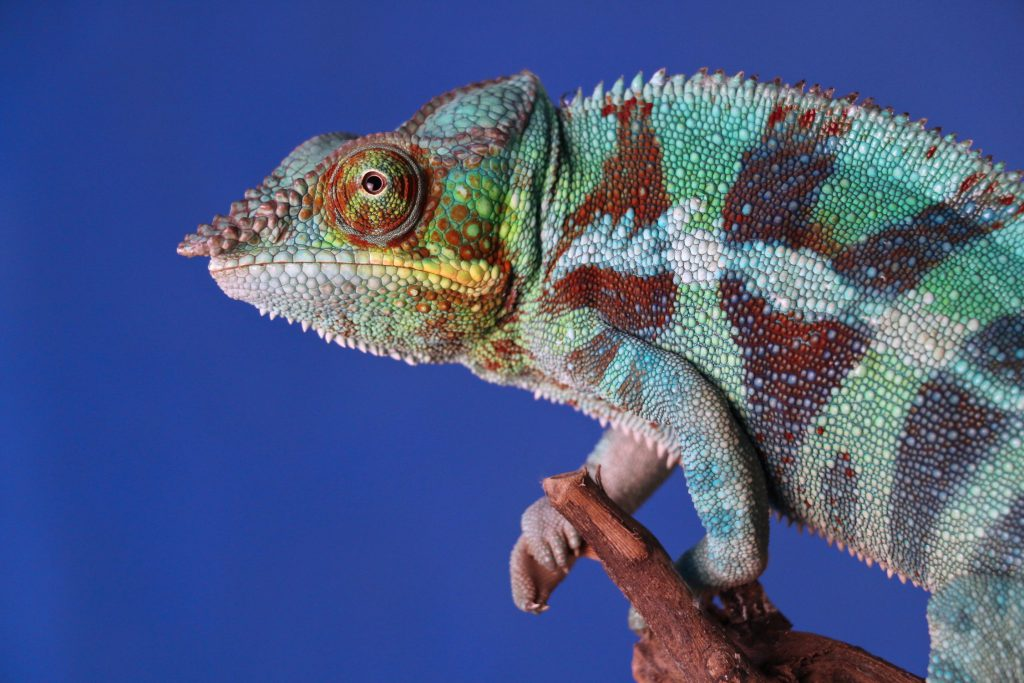 Ten Facts About Reptiles